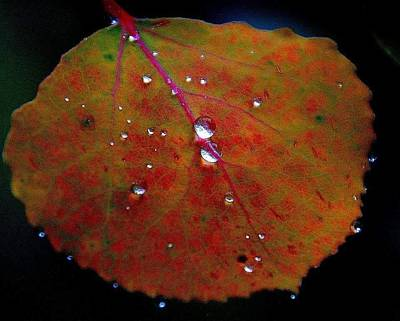 Photograph - Crystal Leaves by Al Swasey