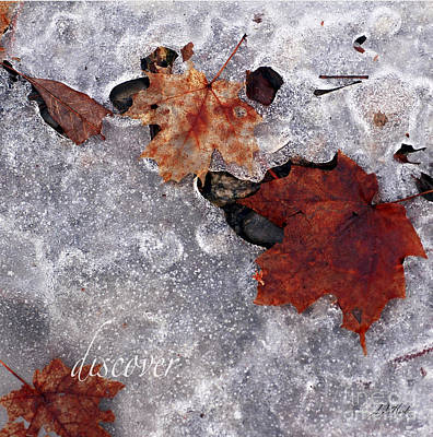 Photograph - Crystal Leaves Discover by Sueann Hack