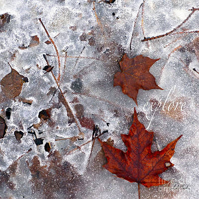 Photograph - Crystal Leaves Explore by Sueann Hack