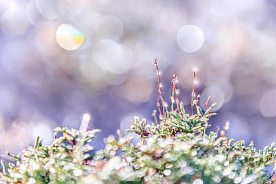 Photograph - Crystal Silence by Evelina Kremsdorf