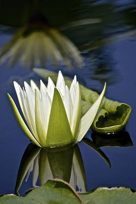Photograph - Crystal Waterlily Reflections by Tana Reiff