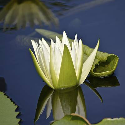 Photograph - Crystal Waterlily by Tana Reiff