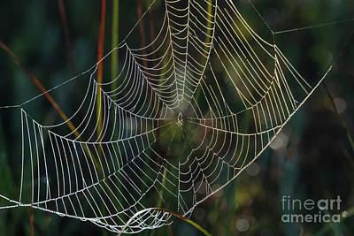 Photograph - Crystal Web by Mike Dawson