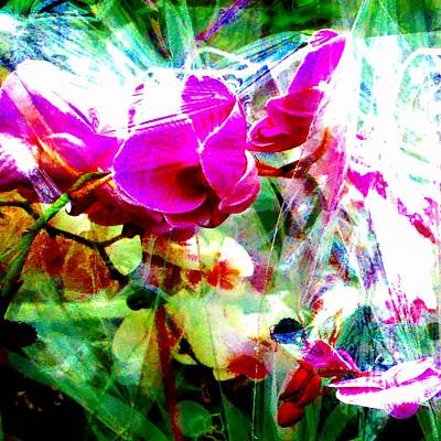 Photograph - Crystalline Orchids 1 by Marianne Dow