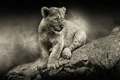 Photograph - Cub by Christine Sponchia