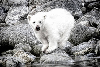 Photograph - Cub On Rock by Lee Adler