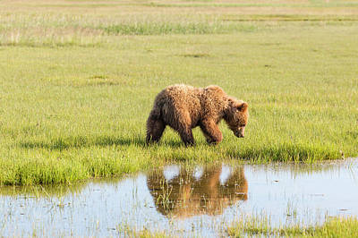 Photograph - Cub Reflection by Mark Harrington