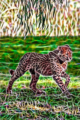 Photograph - Cub Walk by Miroslava Jurcik
