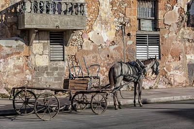 Photograph - Cuban Horse Power Fc by Erron
