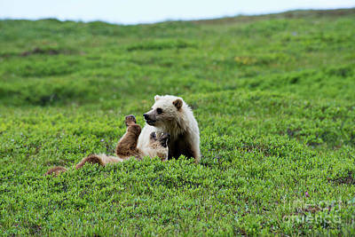 Photograph - Cubs At Play by David Arment