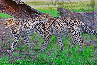 Photograph - Cubs Love by Miroslava Jurcik
