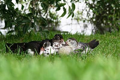 Photograph - Cuddle Buddies by David S Reynolds