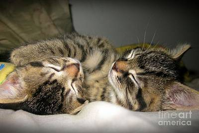 Photograph - Cuddle Buddies by Heather King
