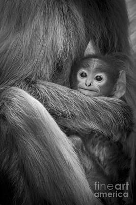 Photograph - Cuddle by Hitendra SINKAR