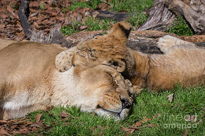 Photograph - Cuddle by Karen Jorstad