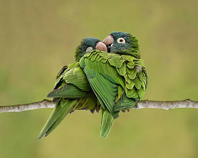 Photograph - Cuddle Time by Dawn Currie