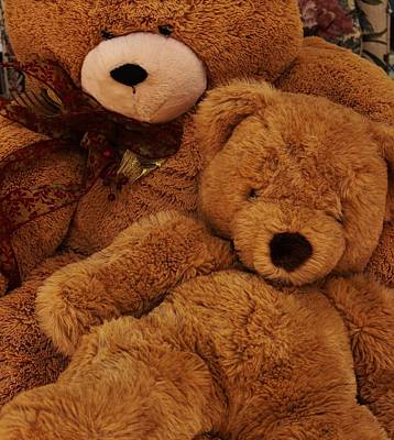Photograph - Cuddling Bear by Christopher James