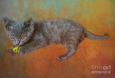 Chartreux Wall Art - Photograph - Cuddly Chartreux Kitten by Elisabeth Lucas