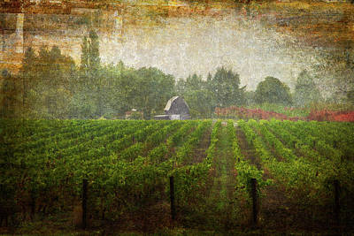 Art Print featuring the photograph Cultivating A Chardonnay by Jeffrey Jensen