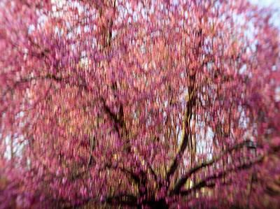 Photograph - Columnar Sargent Cherry 2 by Bernhart Hochleitner
