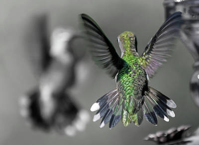 Flying Hummingbird Wall Art - Photograph - Cumberland Gap Hummingbirds by Betsy Knapp