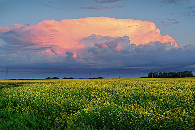 Photograph - Cumulus And Canola by Dan Jurak