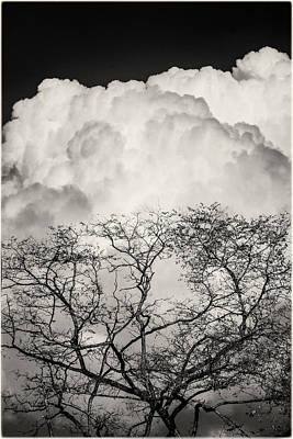 Photograph - Cumulus Clouds And Tree Silhouette by Peter V Quenter