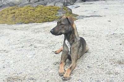Photograph - Cunucu Pet Dog Laying Down On A Beach  by DejaVu Designs