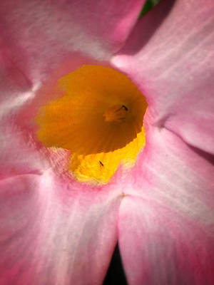 Photograph - Cup Of Nectar by Enzie Shahmiri
