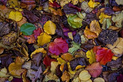Curbside Leaf Litter Art Print by Robert Ullmann