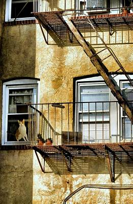 Photograph - Curiosity Kills The Cat by Diana Angstadt