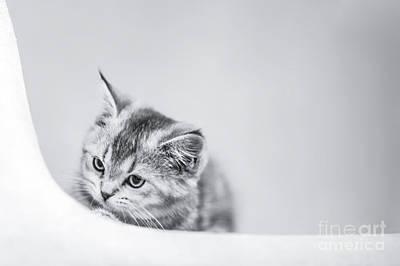 Photograph - Curiosity by Evelina Kremsdorf