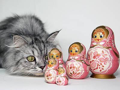 Prints Cat Photograph - Curiosity by Graham Taylor