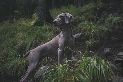 Pups Digital Art - Curiosity Instinct Peaked by Edwin Andrade