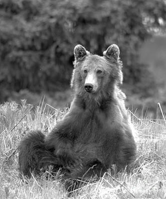 Photograph - Curious And Relaxed Black And White by Adam Jewell