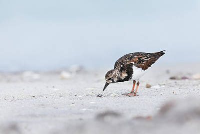 Photograph - Curious Beachcomber by David Watkins