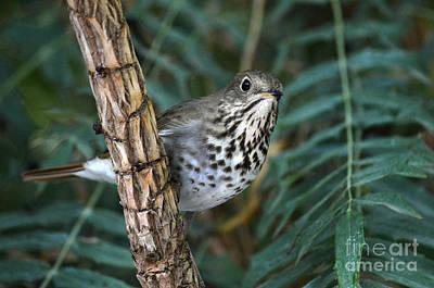 Bamboo Photograph - Curious Bird by Dan Holm