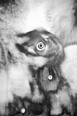 Animal Shelter Photograph - Curious ...brushed Steel 2 by Tom Druin