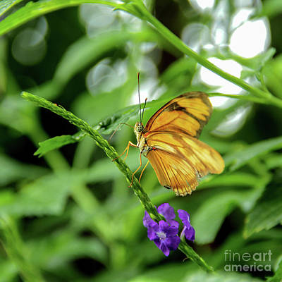 Photograph - Curious Butterfly by Linda Joyce