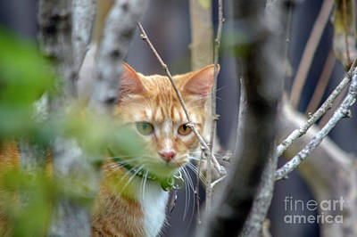 Christmas Christopher And Amanda Elwell - Curious Cat by Christopher Saleh