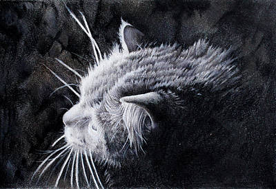 Drawing - Curious Cat by Kay Walker