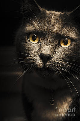 Puss Photograph - Curious Cat Watching From The Shadows by Jorgo Photography - Wall Art Gallery
