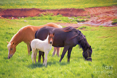 Curious Colt And Mares Art Print