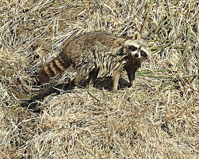 Photograph - Curious Coon by Kathy M Krause