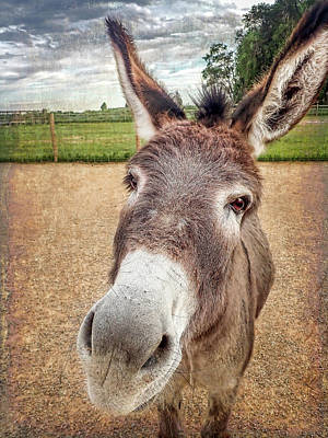 Photograph - Curious Donkey by Jennifer Grossnickle