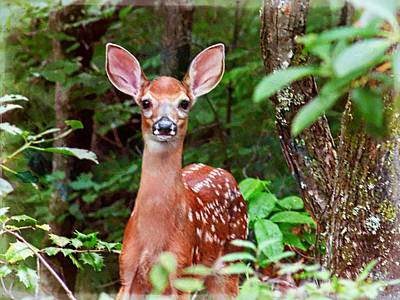 Photograph - Curious Fawn by Joe Duket
