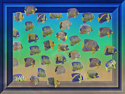Dimensions Digital Art - Curious Fish by Betsy Knapp