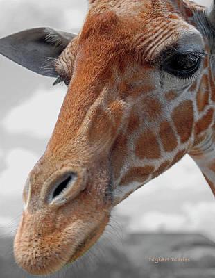 Headshot Digital Art - Curious Giraffe by DigiArt Diaries by Vicky B Fuller