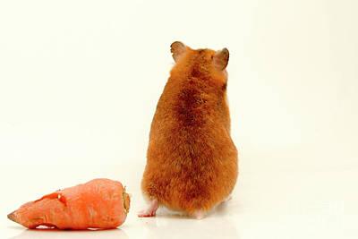 Hamster Baby Photograph - Curious Hamster 1 by Yedidya yos mizrachi