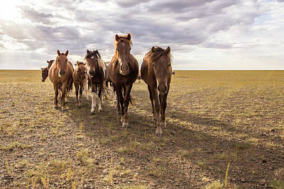 Art Print featuring the photograph Curious Horses by Hitendra SINKAR